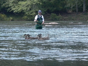Flyfisher and ducks on the Chattahoochee